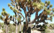 A photo of a desert plant