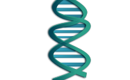 Artist's impression of the DNA double helix structure
