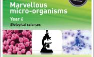 Marvellous micro-organisms cover