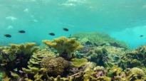 A Healthy coral reef