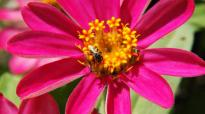 A flower with a wasp on it.